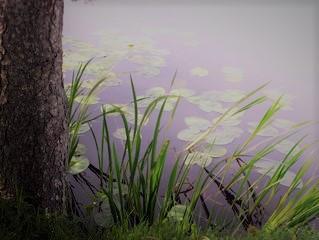 fairy-pond-1393019 (2)