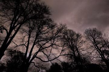 dark-forest-2-1184123 (2)