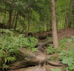 woodland-stream-free images (3)