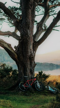 bike under tree