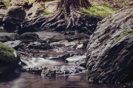 tree roots stream