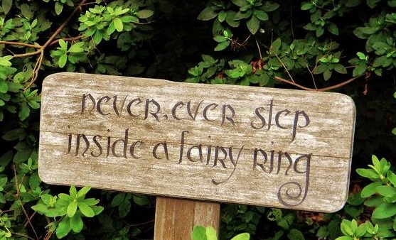 faery ring3 (2)