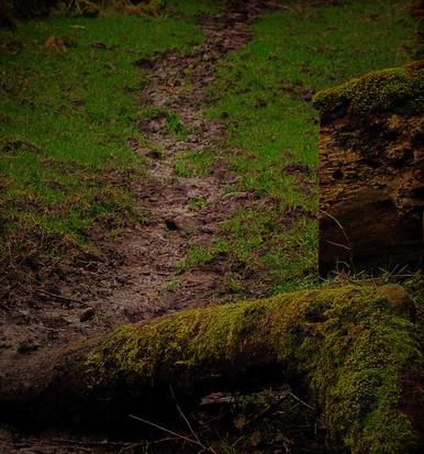 mud path (2)