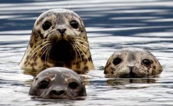 seals (2)