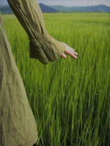 tall grass (2)